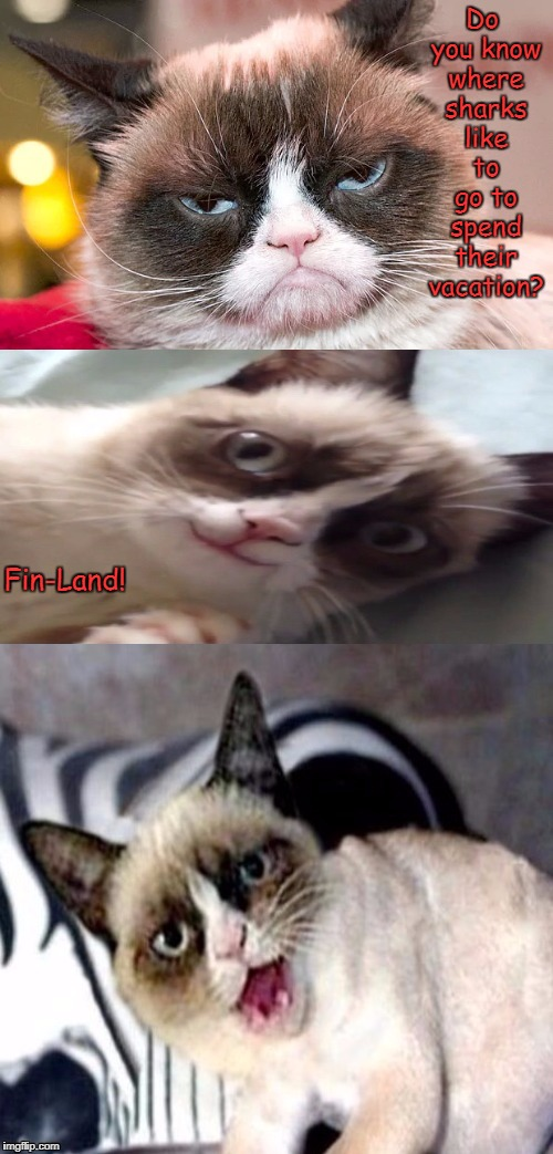 Bad Pun Grumpy Cat | Do you know where sharks like to go to spend their vacation? Fin-Land! | image tagged in bad pun grumpy cat,bad pun,memes | made w/ Imgflip meme maker