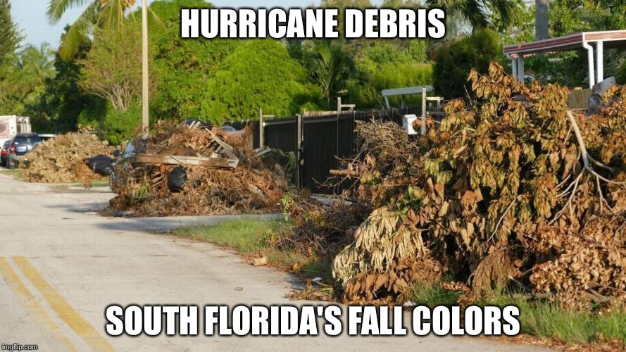 Fall colors | HURRICANE DEBRIS SOUTH FLORIDA'S FALL COLORS | image tagged in hurricane irma,autumn leaves,memes | made w/ Imgflip meme maker