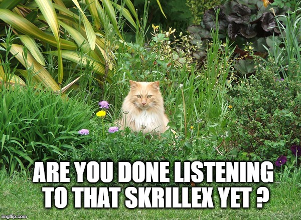 ARE YOU DONE LISTENING TO THAT SKRILLEX YET ? | image tagged in cat,skrillex,music,dubstep,loud | made w/ Imgflip meme maker