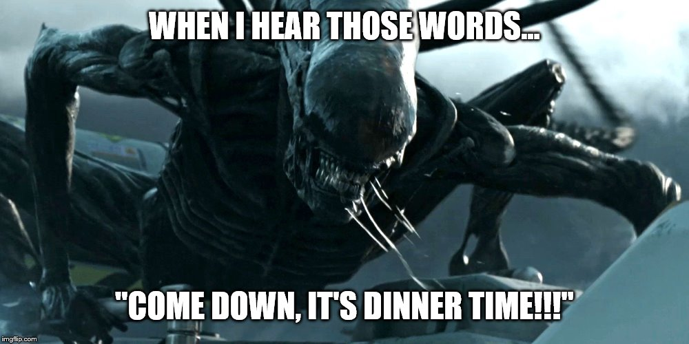 "WHEN I HEAR THOSE WORDS... ""COME DOWN, IT'S DINNER TIME!!!"" 