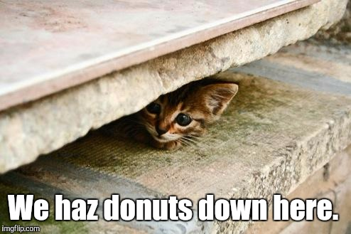 We haz donuts down here. | made w/ Imgflip meme maker