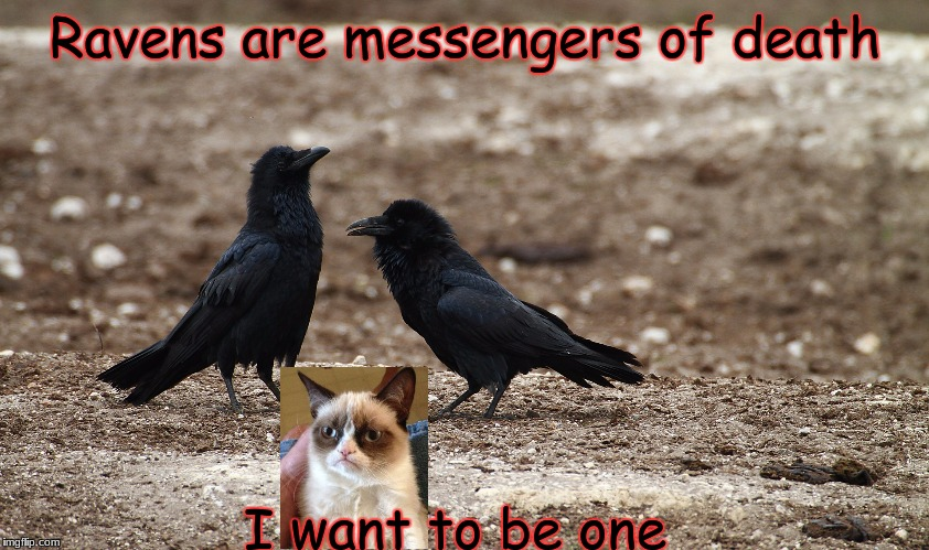 Crows/Ravens | Ravens are messengers of death I want to be one | image tagged in crows/ravens | made w/ Imgflip meme maker