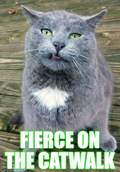 Smiley Cat | FIERCE ON THE CATWALK | image tagged in smiley cat | made w/ Imgflip meme maker