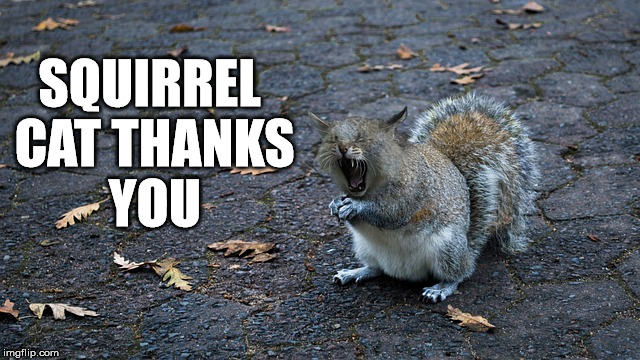 SQUIRREL CAT THANKS YOU | made w/ Imgflip meme maker
