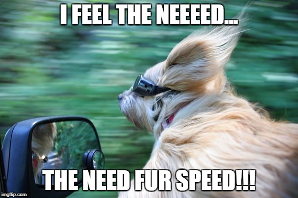 I FEEL THE NEEEED... THE NEED FUR SPEED!!! | image tagged in fur speed | made w/ Imgflip meme maker