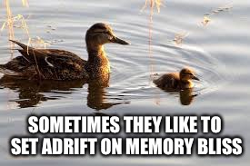 SOMETIMES THEY LIKE TO SET ADRIFT ON MEMORY BLISS | made w/ Imgflip meme maker