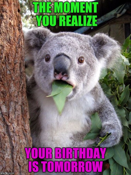 WOOOOO! CAN'T WAIT!!! BIRTHDAY ALMOST HERE! | THE MOMENT YOU REALIZE YOUR BIRTHDAY IS TOMORROW | image tagged in shocked koala,birthday,9/26 | made w/ Imgflip meme maker