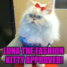 LUNA THE FASHION KITTY APPROVED! | made w/ Imgflip meme maker