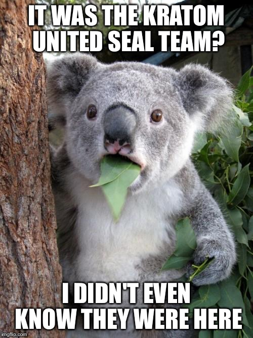 Surprised Koala Meme | IT WAS THE KRATOM UNITED SEAL TEAM? I DIDN'T EVEN KNOW THEY WERE HERE | image tagged in memes,surprised koala | made w/ Imgflip meme maker