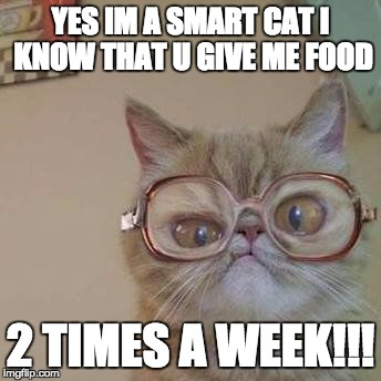 Funny Cat with Glasses |  YES IM A SMART CAT I KNOW THAT U GIVE ME FOOD; 2 TIMES A WEEK!!! | image tagged in funny cat with glasses | made w/ Imgflip meme maker