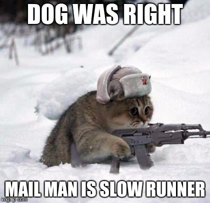 Cute Sad Soviet War Kitten | DOG WAS RIGHT MAIL MAN IS SLOW RUNNER | image tagged in cute sad soviet war kitten | made w/ Imgflip meme maker
