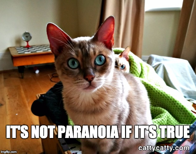 IT'S NOT PARANOIA IF IT'S TRUE | image tagged in paranoid meme,funny cat memes,funny cat meme | made w/ Imgflip meme maker