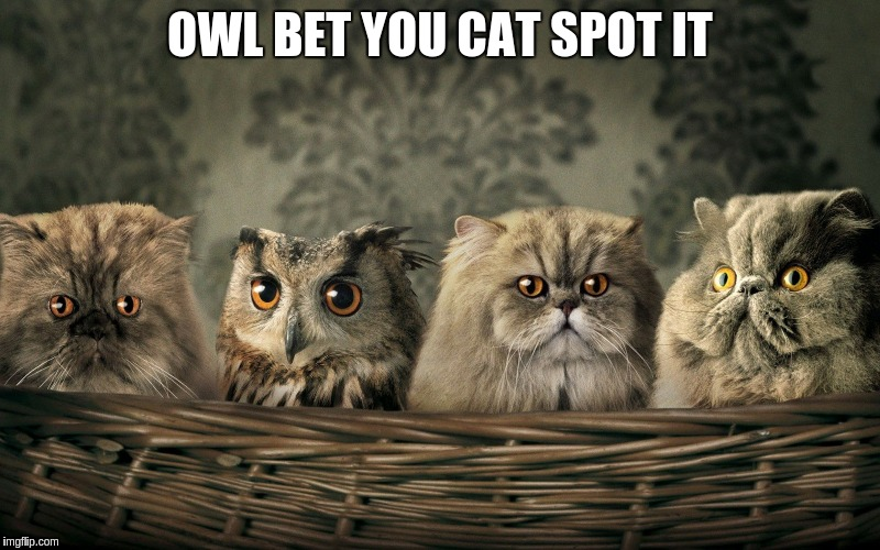 A basket of night vision | OWL BET YOU CAT SPOT IT | image tagged in memes,cats,owls | made w/ Imgflip meme maker