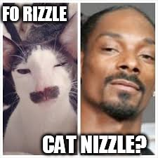 FO RIZZLE CAT NIZZLE? | made w/ Imgflip meme maker