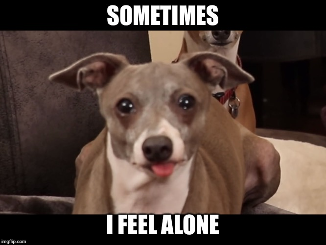 SOMETIMES I FEEL ALONE | image tagged in kermit's suffer | made w/ Imgflip meme maker