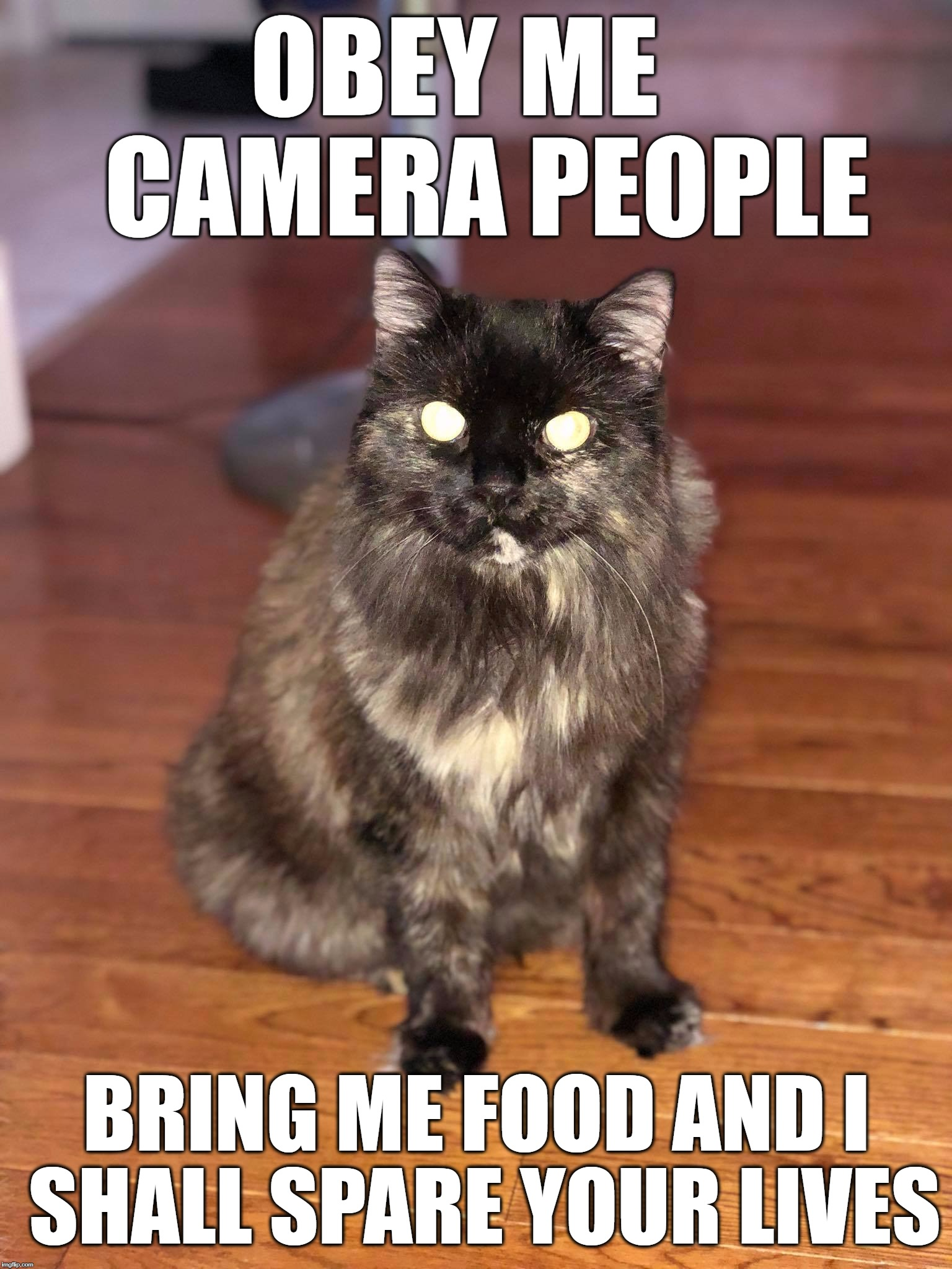 Evil Cat | OBEY ME   CAMERA PEOPLE BRING ME FOOD AND I SHALL SPARE YOUR LIVES | image tagged in memes,funny memes,funny cat memes,evil cat | made w/ Imgflip meme maker