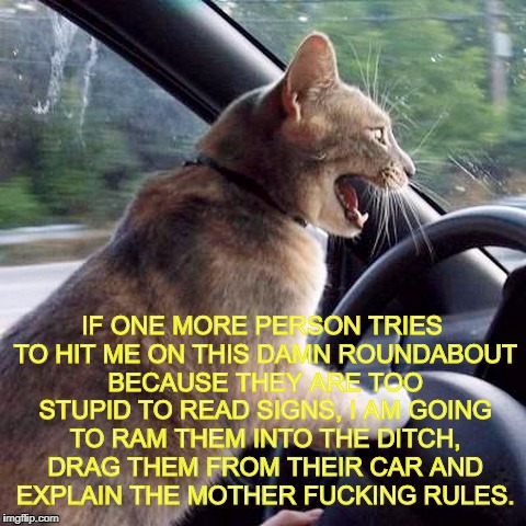 Road Rage Cat | IF ONE MORE PERSON TRIES TO HIT ME ON THIS DAMN ROUNDABOUT BECAUSE THEY ARE TOO STUPID TO READ SIGNS, I AM GOING TO RAM THEM INTO THE DITCH, | image tagged in road rage cat,roundabout,funny,relatable,bad drivers | made w/ Imgflip meme maker