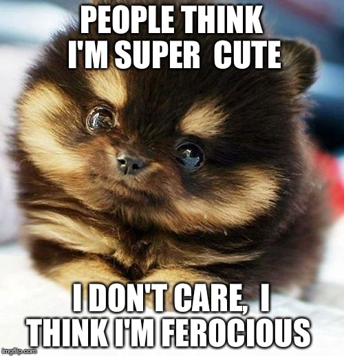 Funny Puppy Dog Pictures