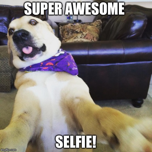 Funny dog meme | SUPER AWESOME SELFIE! | image tagged in funny dog meme | made w/ Imgflip meme maker