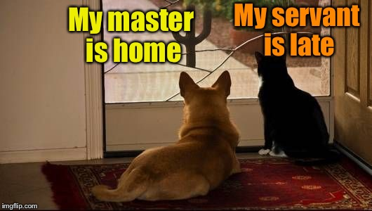 The difference between dogs and cats | My master is home My servant is late | image tagged in memes,dog vs cat,dog,cat | made w/ Imgflip meme maker