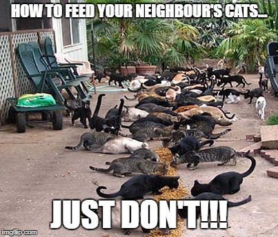 There is always that one person | HOW TO FEED YOUR NEIGHBOUR'S CATS... JUST DON'T!!! | image tagged in cats,wrong neighboorhood cats,funny,just don't do it,food,that one person | made w/ Imgflip meme maker