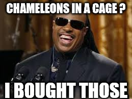 CHAMELEONS IN A CAGE ? I BOUGHT THOSE | made w/ Imgflip meme maker