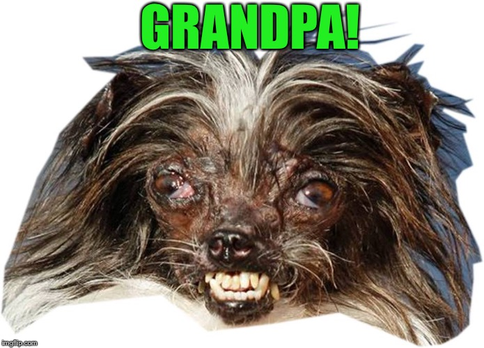 GRANDPA! | image tagged in ug dog | made w/ Imgflip meme maker