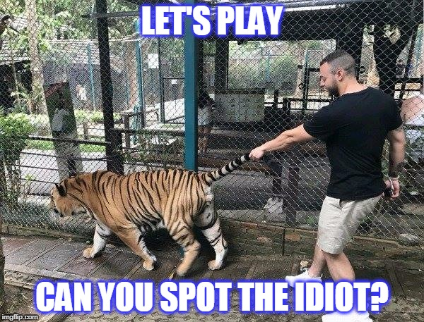 idiot | LET'S PLAY CAN YOU SPOT THE IDIOT? | image tagged in tiger,idiot,zoo | made w/ Imgflip meme maker