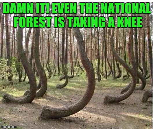 It's getting out of hand | DAMN IT! EVEN THE NATIONAL FOREST IS TAKING A KNEE | image tagged in kneeling,trees | made w/ Imgflip meme maker