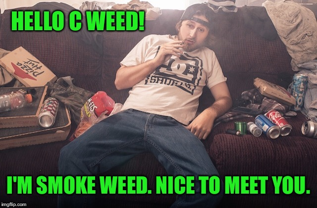 Stoner on couch | HELLO C WEED! I'M SMOKE WEED. NICE TO MEET YOU. | image tagged in stoner on couch | made w/ Imgflip meme maker