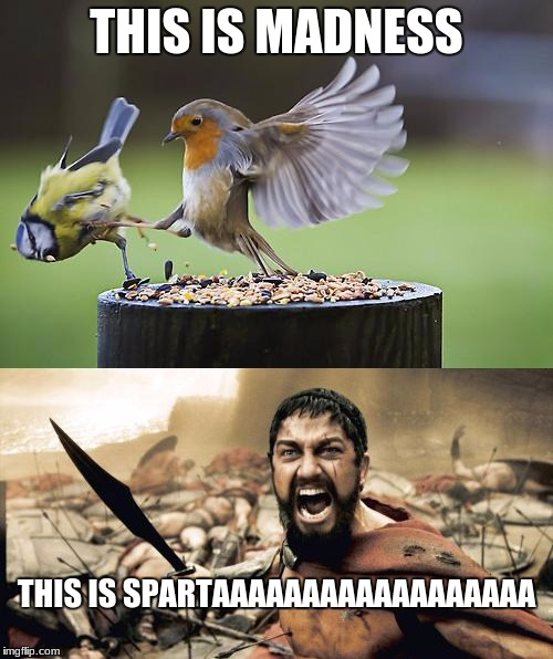 this is spartaaaaaaaaa | THIS IS MADNESS THIS IS SPARTAAAAAAAAAAAAAAAAAA | image tagged in this is sparta meme | made w/ Imgflip meme maker