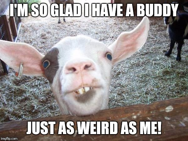 I'M SO GLAD I HAVE A BUDDY JUST AS WEIRD AS ME! | image tagged in smiling goat | made w/ Imgflip meme maker