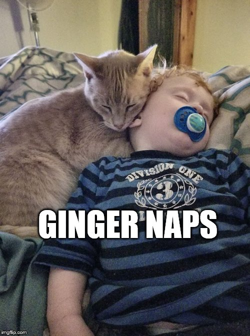 Gingersnap | GINGER NAPS | image tagged in ginger naps,cat meme,puns,buddies | made w/ Imgflip meme maker