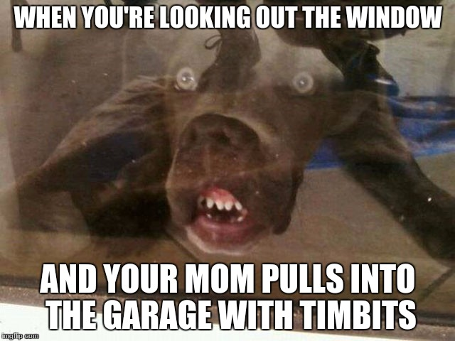 WHEN YOU'RE LOOKING OUT THE WINDOW AND YOUR MOM PULLS INTO THE GARAGE WITH TIMBITS | image tagged in dogs,dog,dog memes,timbits,get stoned | made w/ Imgflip meme maker