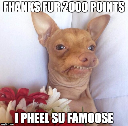 THANKS FOR 2000! | FHANKS FUR 2000 POINTS I PHEEL SU FAMOOSE | image tagged in phank u,thank you,doggo,first world problems | made w/ Imgflip meme maker