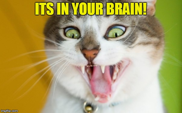 ITS IN YOUR BRAIN! | made w/ Imgflip meme maker
