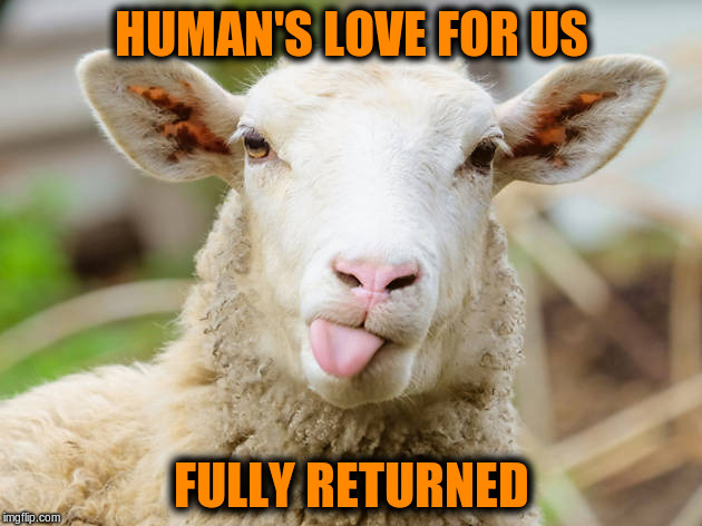 HUMAN'S LOVE FOR US FULLY RETURNED | made w/ Imgflip meme maker