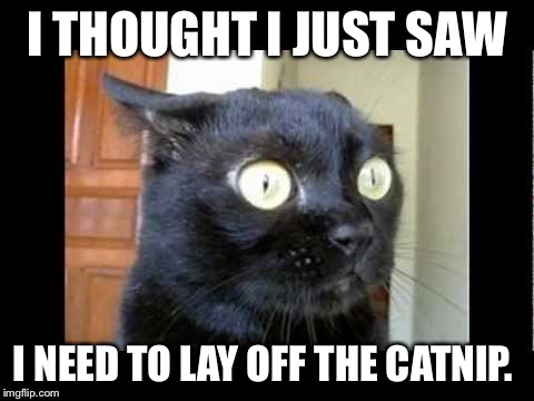 I THOUGHT I JUST SAW I NEED TO LAY OFF THE CATNIP. | made w/ Imgflip meme maker