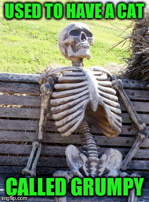 Waiting Skeleton Meme | USED TO HAVE A CAT CALLED GRUMPY | image tagged in memes,waiting skeleton | made w/ Imgflip meme maker