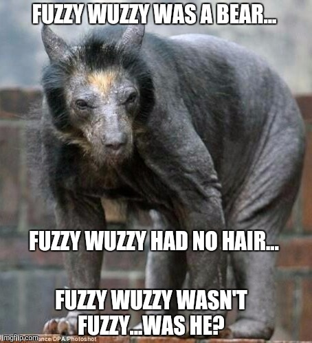 Fuzzy Wuzzy does exist!  | FUZZY WUZZY WAS A BEAR... FUZZY WUZZY HAD NO HAIR... FUZZY WUZZY WASN'T FUZZY...WAS HE? | image tagged in hairless bear,fuzzy wuzzy,jbmemegeek,funny animals,wierd,confession bear | made w/ Imgflip meme maker