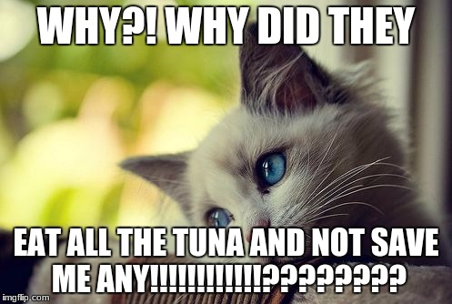 First World Problems Cat Meme | WHY?! WHY DID THEY EAT ALL THE TUNA AND NOT SAVE ME ANY!!!!!!!!!!!!???????? | image tagged in memes,first world problems cat | made w/ Imgflip meme maker