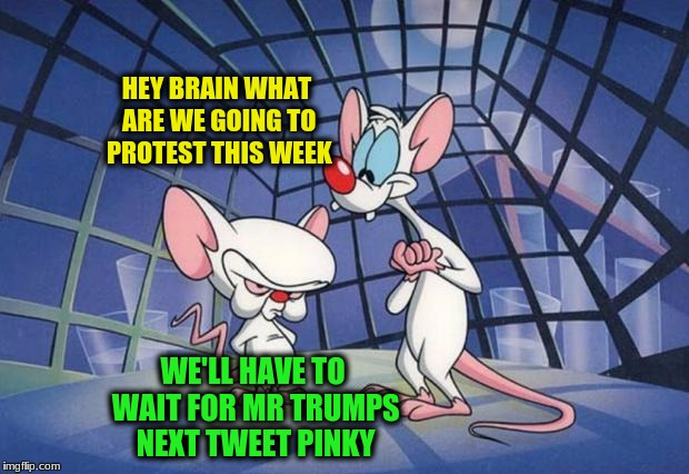 Pinky and the Brain | HEY BRAIN WHAT ARE WE GOING TO PROTEST THIS WEEK WE'LL HAVE TO WAIT FOR MR TRUMPS NEXT TWEET PINKY | image tagged in pinky and the brain | made w/ Imgflip meme maker