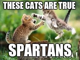 this is sparta | THESE CATS ARE TRUE SPARTANS | image tagged in funny | made w/ Imgflip meme maker