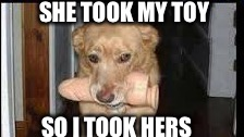 Dog toy | SHE TOOK MY TOY SO I TOOK HERS | image tagged in dogs,toys,her toy | made w/ Imgflip meme maker