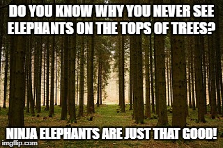 Ninja Elephants | DO YOU KNOW WHY YOU NEVER SEE ELEPHANTS ON THE TOPS OF TREES? NINJA ELEPHANTS ARE JUST THAT GOOD! | image tagged in ninja,elephant,trees,funny animals | made w/ Imgflip meme maker