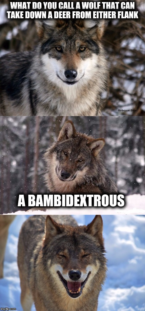 Bad Pun Wolf | WHAT DO YOU CALL A WOLF THAT CAN TAKE DOWN A DEER FROM EITHER FLANK A BAMBIDEXTROUS | image tagged in bad pun wolf,memes,bad puns,custom template | made w/ Imgflip meme maker