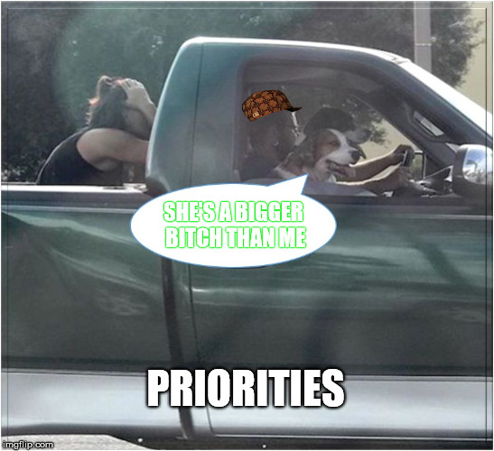 Dog Housed  | SHE'S A BIGGER B**CH THAN ME PRIORITIES | image tagged in priorities,trucks,funny memes,dog,scumbag | made w/ Imgflip meme maker