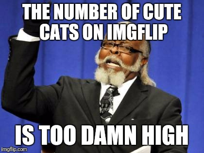 Too Damn High Meme | THE NUMBER OF CUTE CATS ON IMGFLIP IS TOO DAMN HIGH | image tagged in memes,too damn high | made w/ Imgflip meme maker