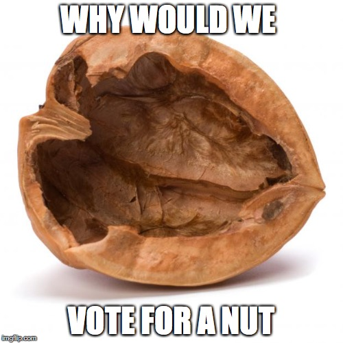Nutshell | WHY WOULD WE VOTE FOR A NUT | image tagged in nutshell | made w/ Imgflip meme maker