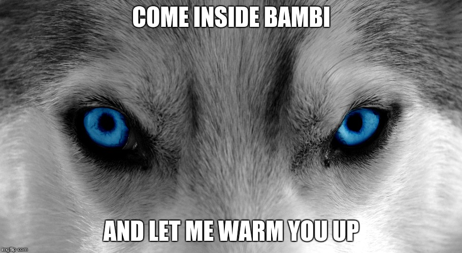 COME INSIDE BAMBI AND LET ME WARM YOU UP | made w/ Imgflip meme maker
